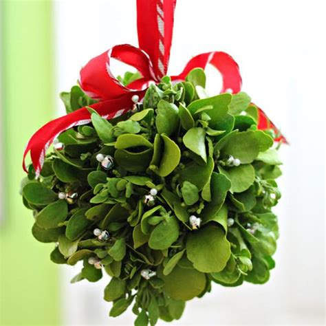 mistletoe is a tradition for mistletoe is a christmas tradition redlands daily facts