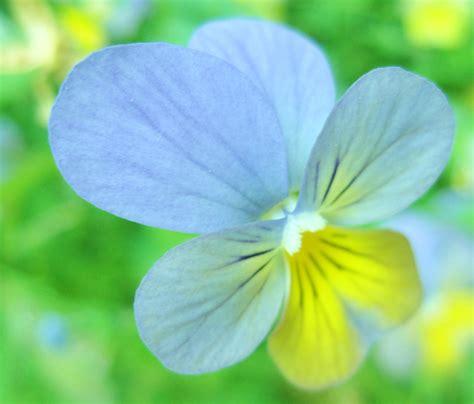 pretty flower flowers photo  fanpop