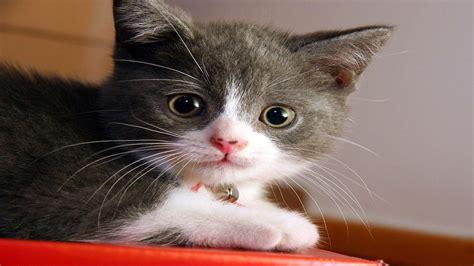 1920x1080 Px Animal Cat Cats Cute Kitty Pet Sweet High