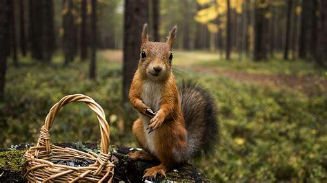 Summer Animal Wallpaper - squirrel shopping summer hd animals 4k wallpapers