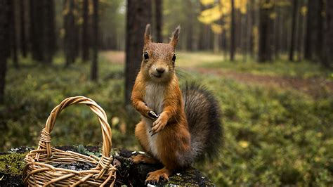 squirrel shopping summer hd animals  wallpapers