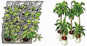 Pflanzen Als Raumteiler : zimmer und gartenblumen ~ Yasmunasinghe.com Haus und Dekorationen