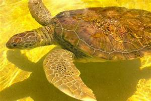 Sea Turtle - Picture of Cayman Turtle Centre: Island ...