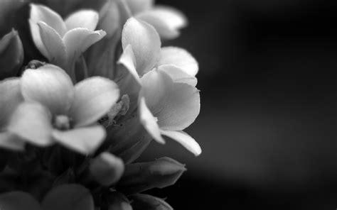 canaper noir et blanc photo fleurs en noir et blanc
