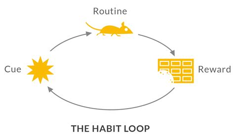 how habits are formed in the brain the habit loop