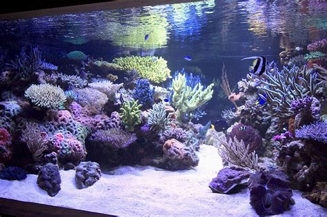 Saltwater Aquarium Aquascape by Reef Aquarium Aquascape Designs My Manly Fish Beat Up