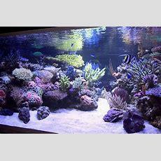 Reef Aquarium Aquascape Designs  My Manly Fish Beat Up