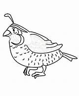 Quail Coloring Pages Preschool Printable Animals Worksheets Animal Colorluna sketch template