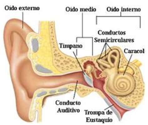 12 mejores imágenes de Audición Aparato auditivo