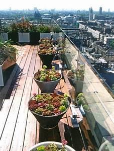 Pflanzen Für Dachterrasse : coole idee f r die gestaltung einer dachterrasse mit ~ Michelbontemps.com Haus und Dekorationen