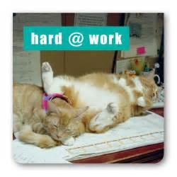 Cat Hard at Work Funny
