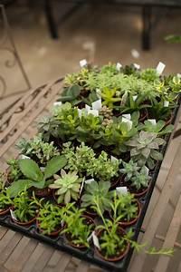 Assorted, 2, U0026quot, Succulents