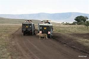 Quelle destination pour un premier safari ? - Ma vie nomade
