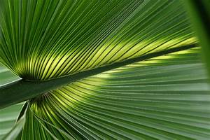 Tropical Leaves Wallpaper - WallpaperSafari