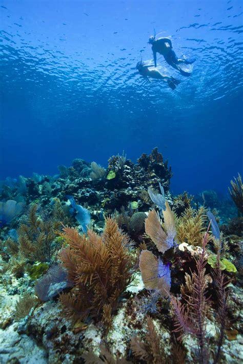 belize snorkeling resorts snorkeling vacations reef packages