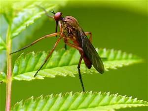 Mücken Bekämpfen Hausmittel : effektives hausmittel gegen m cken ~ Articles-book.com Haus und Dekorationen