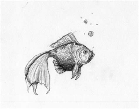 Pencil Drawings Of Animals Pencil Sketches Nature Pencil ...
