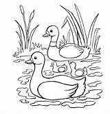 Duck Coloring Pages sketch template