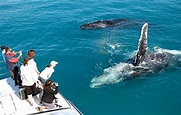 Whale Watching Tour To Maui, Hawaii - Traveler Corner