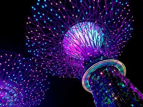 singapore gardens   bay supertree grove