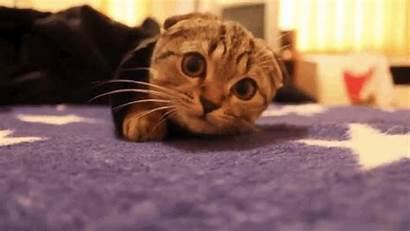 Cat Bomb Kitten Cats Warm Gifs Play