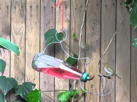 birds drinking from sugar water feeder youtube