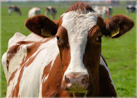 dairy farming financial model efinancialmodels