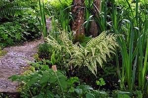 Plantes D Ombre Extérieur : les foug res plantes rustiques d 39 ombre par excellence ~ Melissatoandfro.com Idées de Décoration
