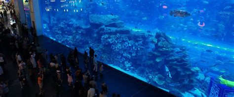 dubai mall aquarium ticket prices