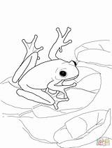Coloring Frog Tree sketch template