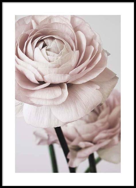Bild Als Poster by Pink Flower No2 Poster