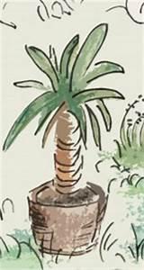 Palme Umtopfen Wurzeln Abschneiden : yucca palme zu gro geworden ~ Frokenaadalensverden.com Haus und Dekorationen