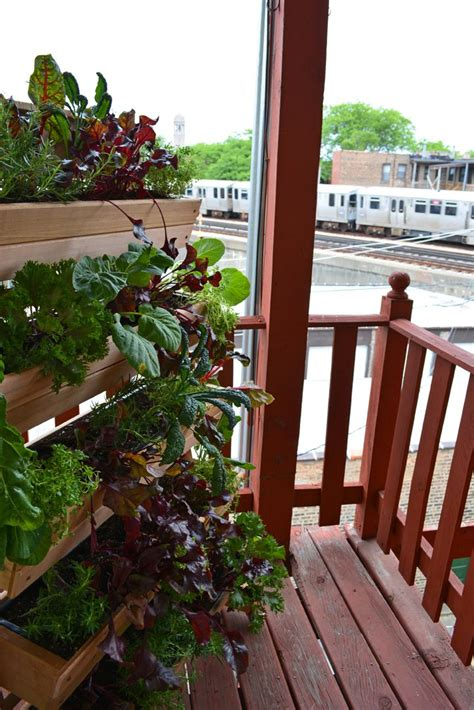 Window Sill Garden Vegetables by A Living Wall Vegetable Garden That Stands Alone