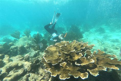 Reef restored: How Belize saved its beloved coral reefs - CSMonitor.com