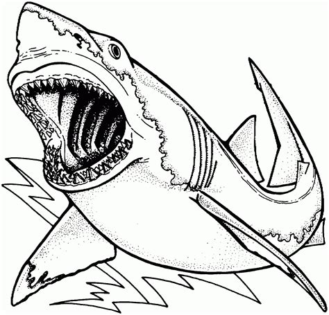 Shark Coloring Pages Printable Page Kids