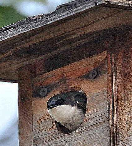 hang  bird house mounting  nesting box