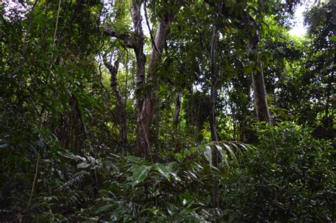 Different Types Of Forest In Loru, Vanuatu Zeromission
