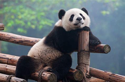 reasons pandas   absolute