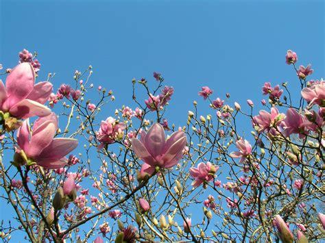 si鑒e printemps ficelles et compagnie mars esquisse de printemps