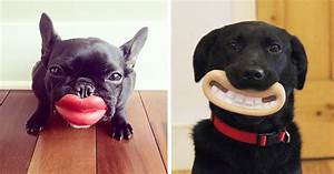 46 Dogs That Have No Idea How Silly They Look With Their ...