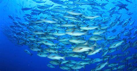fish   sea research university  york