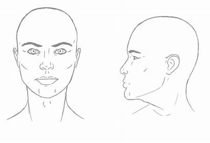 Female Male Between Differences Drawing Apple Facial