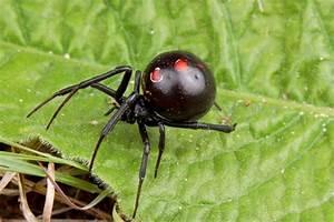 Top 10 Very Deadliest Spiders - Wonders-World.com