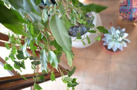 plante dans la chambre dormir avec des plantes dans la chambre danger