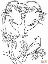 Paradise Coloring Bird Quetzal Pages Drawing Birds Printable Supercoloring Bluebird Super Para Rainforest Outlines Colorings Silhouettes Puzzle Popular sketch template