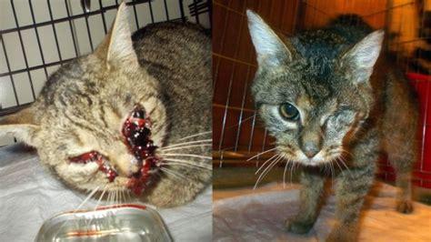 Cat Abuse  In Memory Of VuČko
