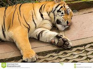 Pin Tiger-claws on Pinterest