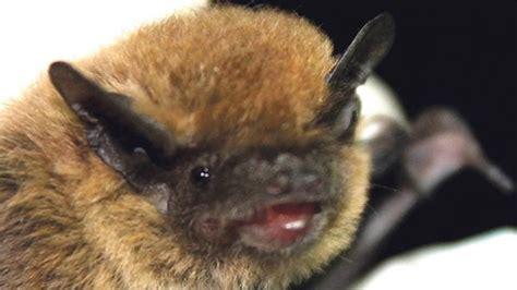 discovering  nightlife  bats  malta