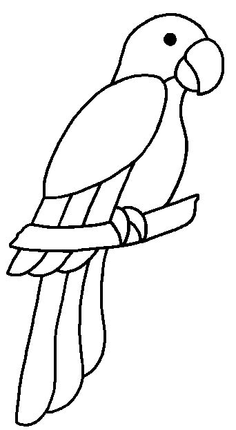 toucan body template parrot outline pictures to pin on pinterest pinsdaddy
