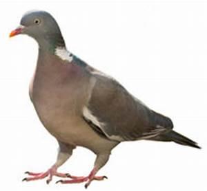 Tauben Vertreiben Geruch : tauben vertreiben wild und vogelabwehr ~ Eleganceandgraceweddings.com Haus und Dekorationen